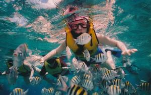 Thumbnail for Snorkeling and Scuba diving tours from Palma